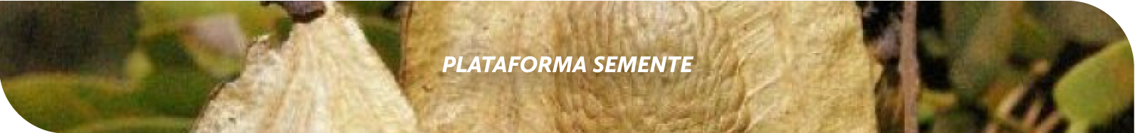 Barra - Semente
